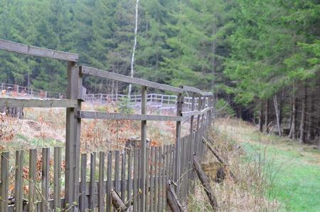 reforestation: Reforestation South Bohemia Czech Republic Stock Photo