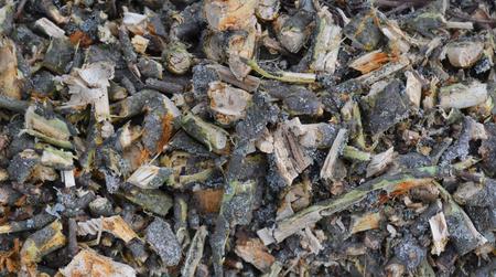 arbres fruitier: branches cass�es d'arbres fruitiers, Boh�me du Sud, R�publique tch�que