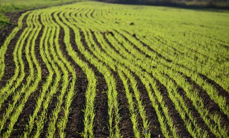 bohemia: view sown fields , southern Bohemia, Czech Republic