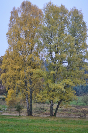 bohemia: lonely dry tree. South Bohemia