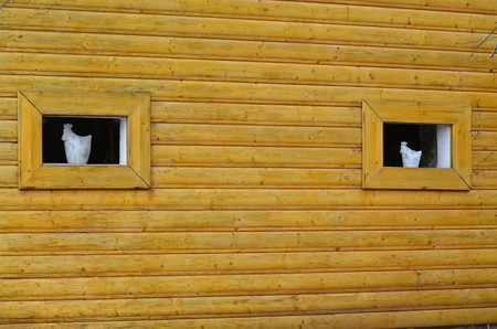 wood paneling: wood paneling walls with windows and ceramics, Czech Republic Stock Photo