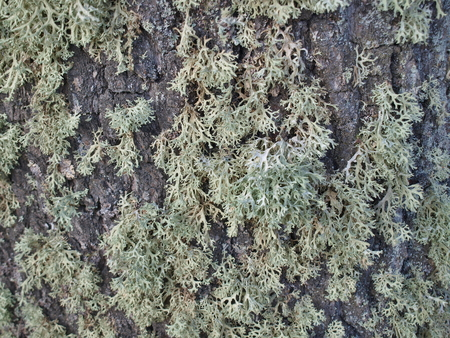 bohemia: Icelandic moss, South Bohemia, Czech Republic Stock Photo