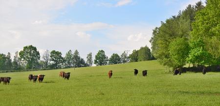 bohemia: view on the landscape of South Bohemia. Czech Republic