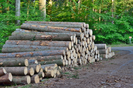 felled: felled trees, ready for transportation, South Bohemia, Czech Republic