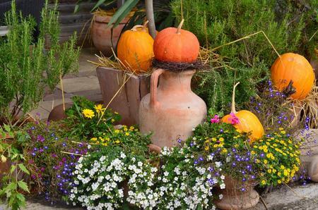 Autumn flower garden decoration, Lower Austria, Austria