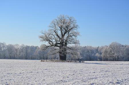 memorial tree, Jemcina, South Bohemia, Czech Republic Stock Photo