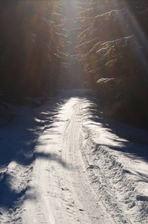 snowy forest road,  South Bohemia, Czech Republic