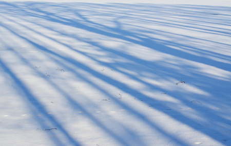 shadows of trees on a snowy plain, south Bohemia, Czech Republic