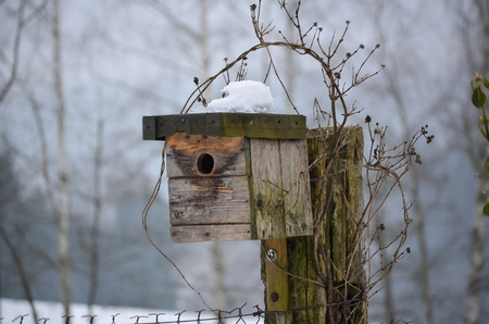 birdhouse in winter, South Bohemia, Czech Republic