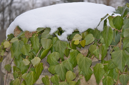 plants covered with frost, southern Bohemia . Czech Republic