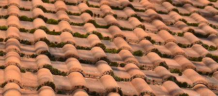 roofing covered with moss, South Bohemia, Czech Republic