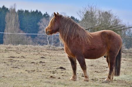 brown horse on a farm. South Bohemia, Czech Republic