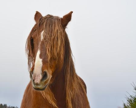 Portrait of a horses head . South Bohemia, Czech Republic