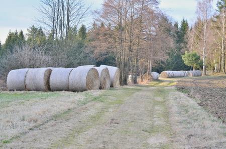 view of haymaking, hay storage, Niederösterreich, Austria