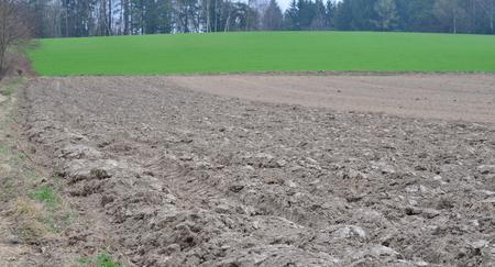 view of spring sown fields , NiederOstereich, Austria Stock Photo
