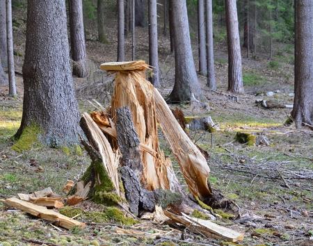 Tree uprooted a large tree, South Bohemia, Czech Republic Stock Photo