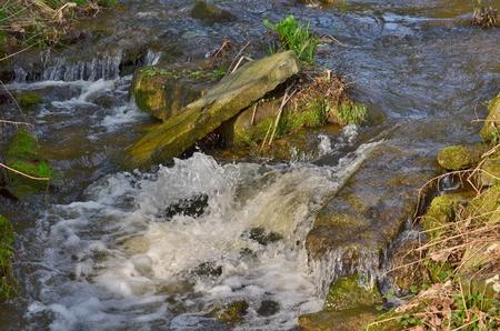 potok v podzimním lese,, Jižní Čechy, Česká republika