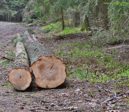 felled trees, ready for transportation, South Bohemia, Czech Republic