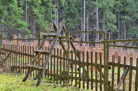 newly planted forest, South Bohemia, Czech Republic