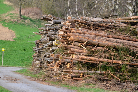 cut tree branches trimmed, South Bohemia, Czech Republic Stock Photo
