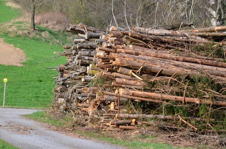 větve stromů řez zdobené, jižní Čechy, Česká republika