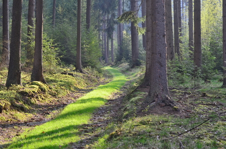 forest road, south Bohemia, Czech Republic