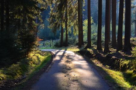 lesní cesta, jižní Čechy, Česká republika