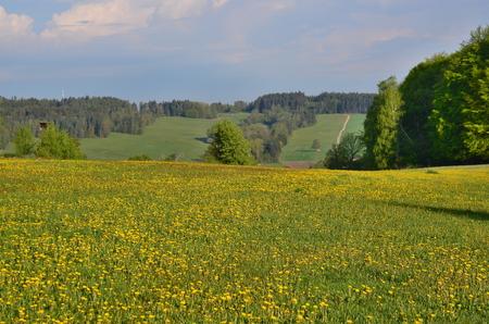 pohled na krajinu jižních Čech. Česká republika