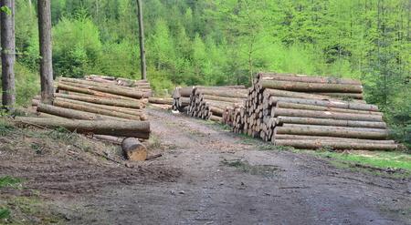dřevo připravené pro dopravu, jižní Čechy, Česká republika