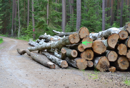 timber ready for transport, South Bohemia, Czech Republic Stock Photo - 78597705