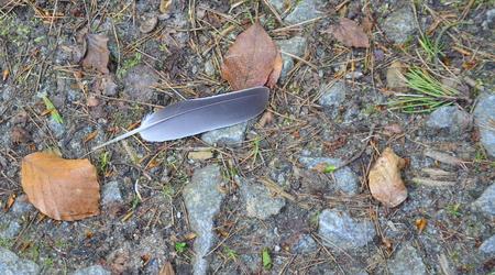 Bird feathers on a nature walk, south Bohemia, Czech Republic
