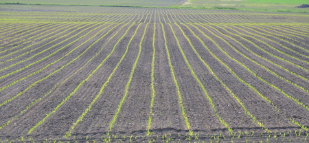 Spring undulating fields . south bohemia, czech republic