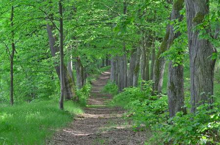 forest road, south Bohemia, Czech Republic Stock Photo - 79396744
