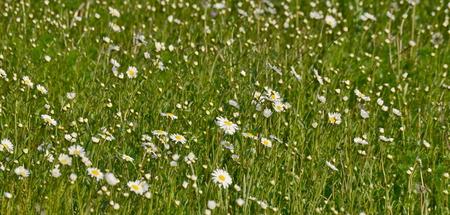 první jarní květiny, Jižní Čechy, Česká republika