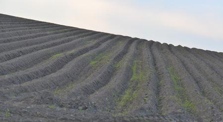 Spring undulating fields . south bohemia, czech republic Stock Photo - 79595212