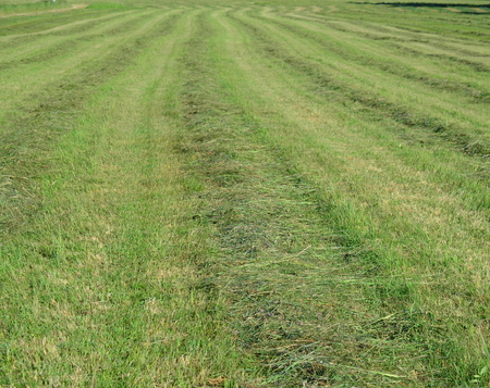 Tradiční suchá tráva, Jižní Čechy. česká republika