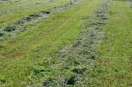 Traditional dry grass, South Bohemia. czech republik Stock Photo