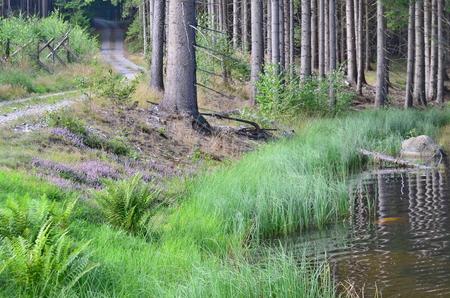 pohled na lesní krajině. Jižní Čechy Reklamní fotografie