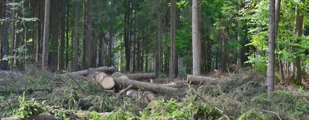 timber ready for transport, South Bohemia, Czech Republic Stock Photo - 85611602