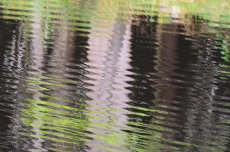 vodní hladina jezera. Jižní Čechy, Česká republika