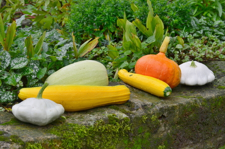 view of autumn vegetables, southern Bohemia , Czech Republic Stock Photo
