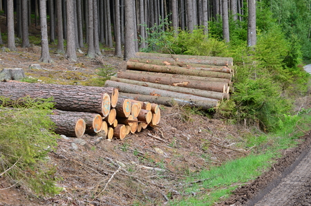 madera lista para el transporte, Bohemia del Sur, República Checa Foto de archivo