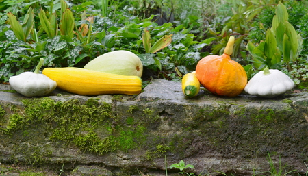 view of autumn vegetables, southern Bohemia , Czech Republic Stock Photo