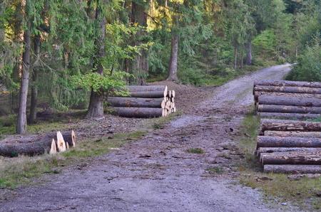 dřevo připravené pro dopravu, jižní Čechy, Česká republika Reklamní fotografie - 88768752