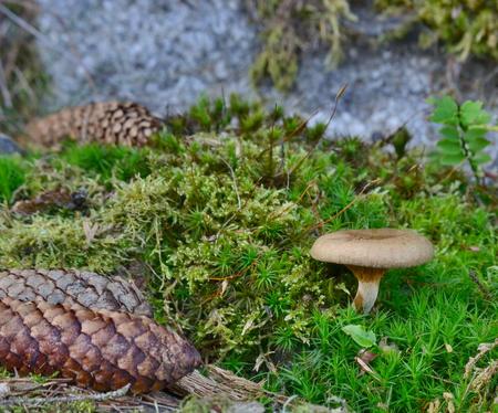pohled na podzimní houby, jižní Čechy, Česká republika Reklamní fotografie - 89633733