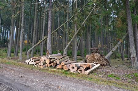 dřevo připravené pro dopravu, jižní Čechy, Česká republika Reklamní fotografie - 89628083