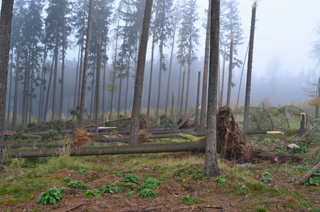 forest damaged by wind, southern Bohemia, Czech Republic Reklamní fotografie - 90097926
