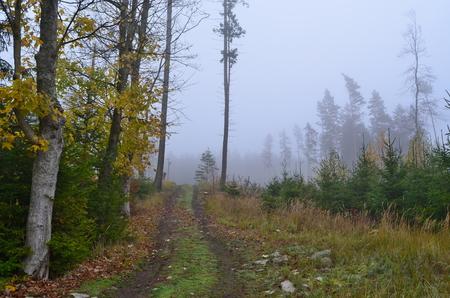 lesní cesta, jižní Čechy, Česká republika Reklamní fotografie - 90996553
