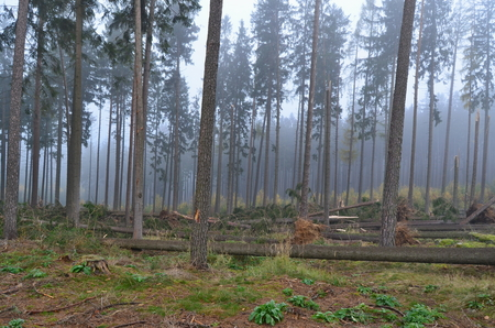 forest damaged by wind, southern Bohemia, Czech Republic Reklamní fotografie - 92106260