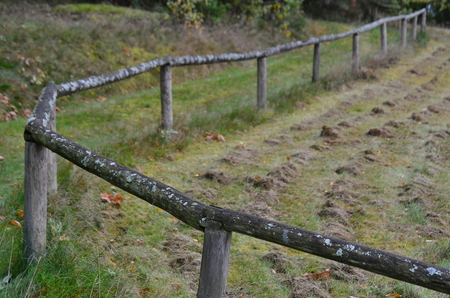 old fence, covered with moss, South Bohemia, Czech Republic